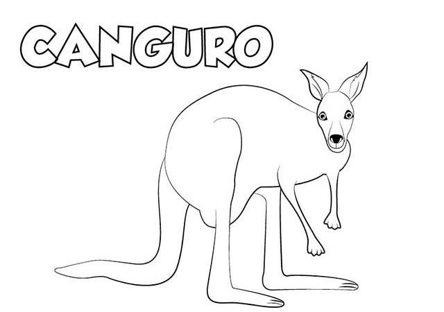 Dibujo colorear CANGURO