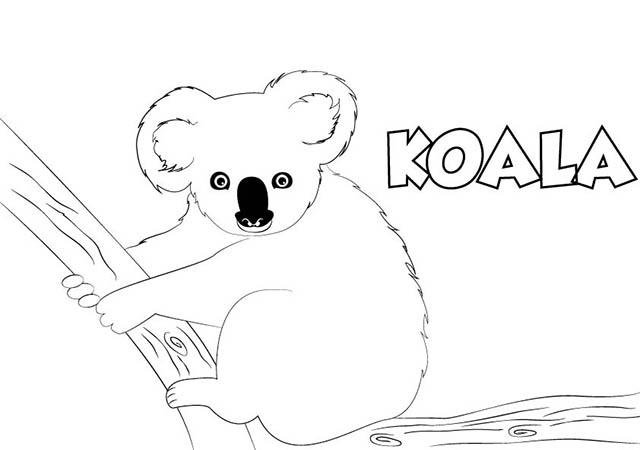 Dibujo Koala Para Imprimir Y Colorear