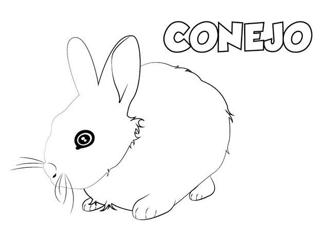 Dibujo Conejo Para Imprimir Y Colorear